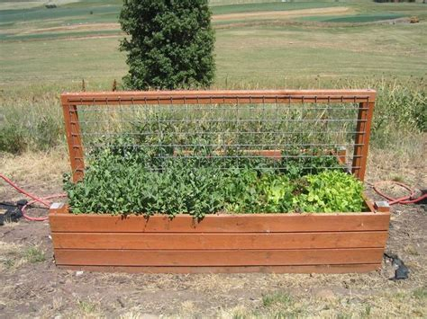 Garden Box Yardening Pinterest Vegetable Box Garden