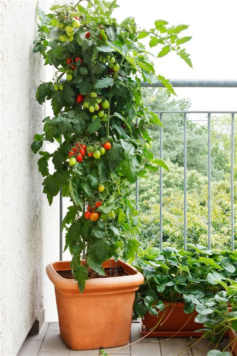 18 ways to make a garden in your house