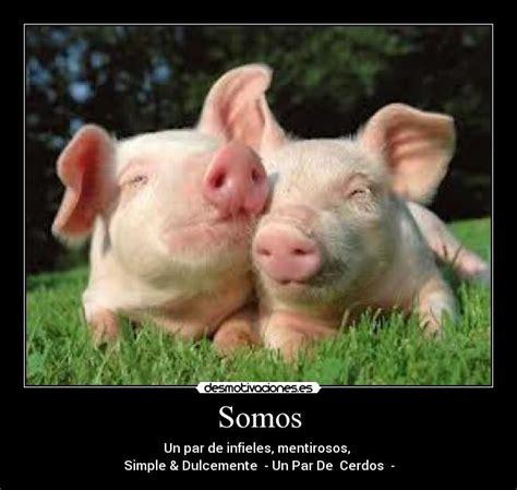 imagenes graciosas de cerdos para navidad fotos de animales graciosas y curiosas cerdos memes