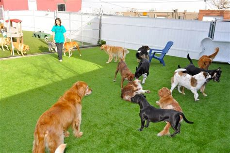 lucky puppy daycare photos for u lucky daycare yelp
