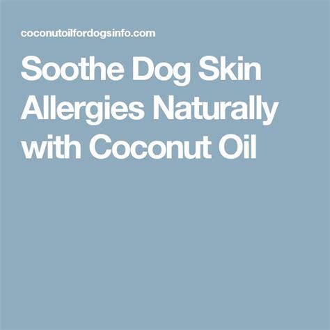 best food for yorkies with skin allergies best 25 skin allergies ideas on