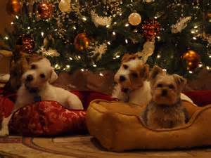 Cute puppy christmas wallpapers pets coloring pages coloring part 7