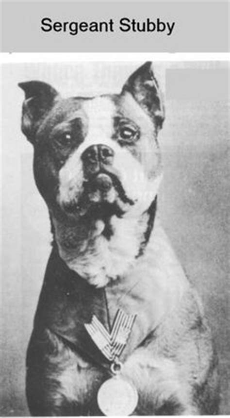 Sgt Stubby Pitbull Ww1 Dogs And Cats On World War I Soldiers And Gas Masks