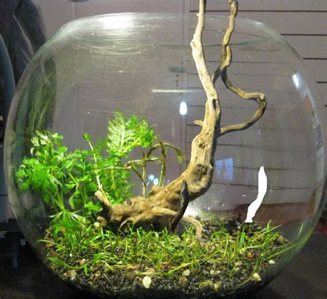 betta aquascape love this idea for a betta bowl aquascaping pinterest