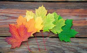 colorful leaves colorful leaves pictures photos and images for