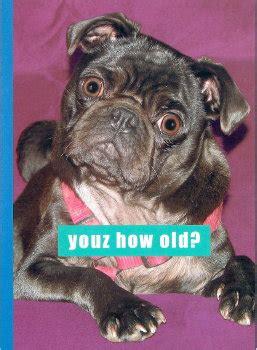 black pug cards the inky paw pug gifts pug cards pug greeting cards pug pug stationery pug greeting