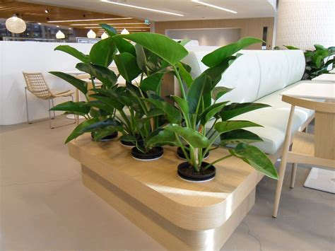plants for office give your office a remodel with office plant rental