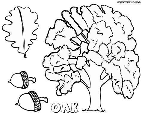 oak tree coloring pages