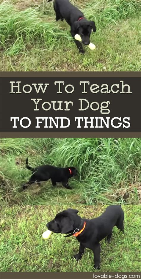 how to your to find things lovable dogs how to teach your to find things lovable dogs