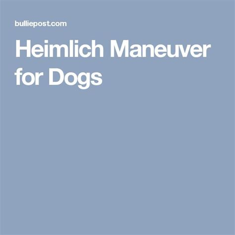 heimlich maneuver for dogs 17 best images about vet tech on cats veterinary technician and blood
