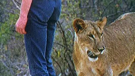 film about lion from harrods the lion cub from harrods movie download in hd dvd divx