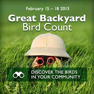 cornell great backyard bird count february at tas birding dining doing dine out with