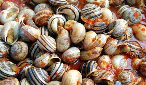 alimentazione lumache di terra lumache molti le mangiano e ora anche tu conosci segreti