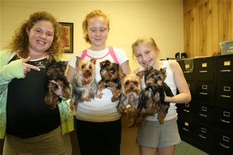cheap yorkie puppies for sale in atlanta yorkie sale