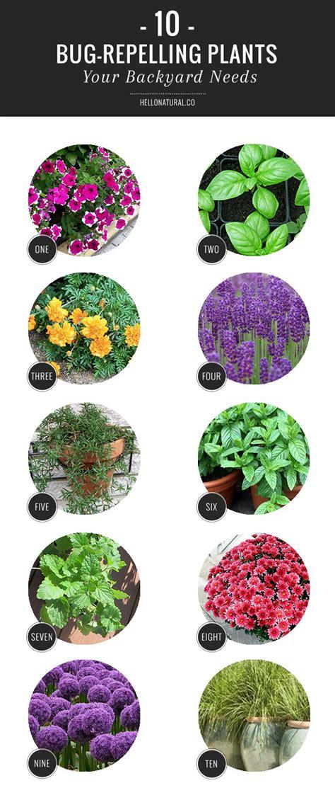 10 bug repelling plants your backyard needs gardening tips
