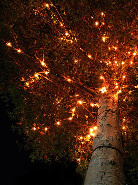 orange tree lights autumn tree lights pictures photos and images for