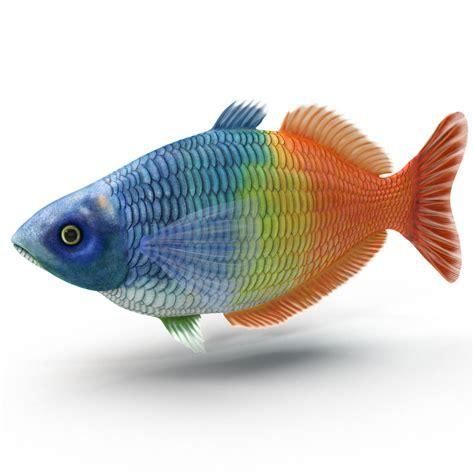Aquarium Fish Model Cumi 13 Liter 3d