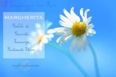 linguaggio dei fiori margherita il linguaggio dei fiori