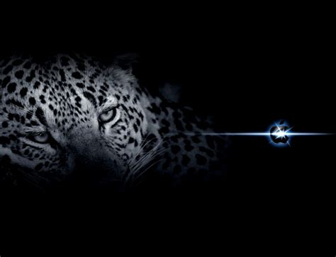 wallpaper apple leopard mac os x snow leopard wallpaper hd wallpapersafari