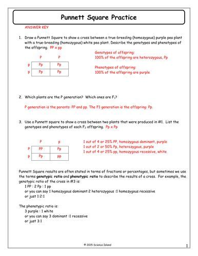 punnett square review worksheet 25 best ideas about punnett square activity on