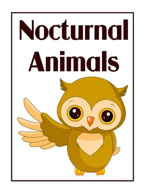printable pictures nocturnal animals the 25 best nocturnal animals ideas on pinterest