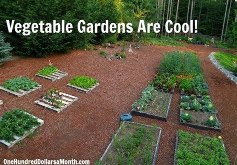 kitchen garden ideas mavis butterfield backyard garden plot pictures week 27 of 52
