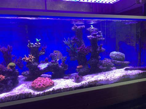 1400 Liters Aquarium Makeover In Uk With Atlantik Led Led Aquarium Lights