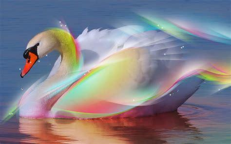 las mas maravillosas imagenes bonitas de paisajes fondos de pantalla aves bonitos cisnes car interior design