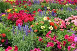 Colorful Garden Flowers A Guide To Planting Flowers