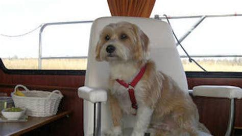 reddingsvest kind huren huur uw boot met een mooi pakket aan exta s yachts4u