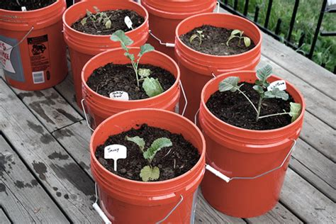 Tips For Container Gardening Container Gardening Vegetables Best Vegetables For Container Gardens