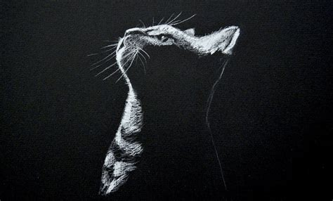 Black And White Chalk Drawings by Chalk Drawing On Black Paper Drawing A Cat White On