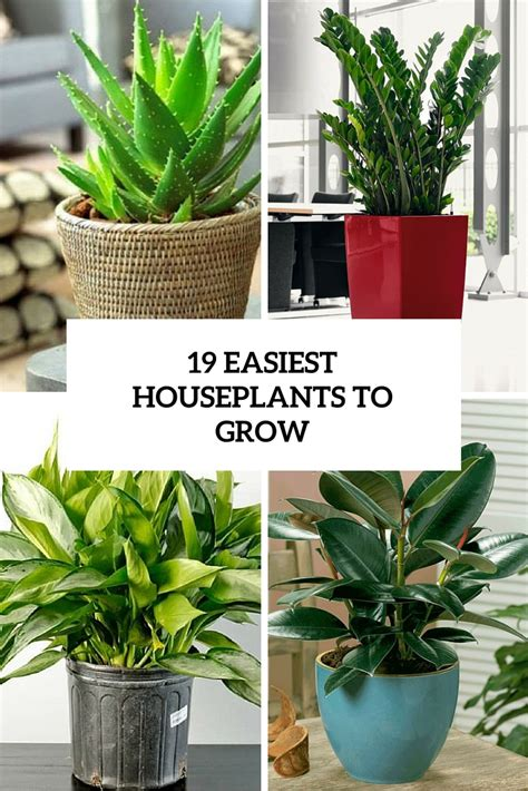 19 easiest houseplants you can grow without care gardenoholic