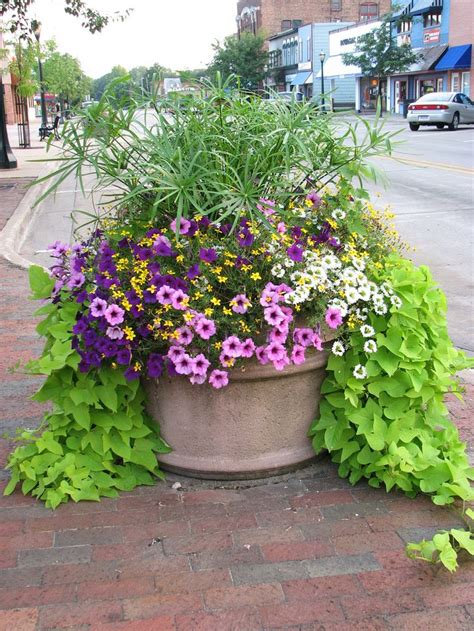 1586 best container gardening ideas images on