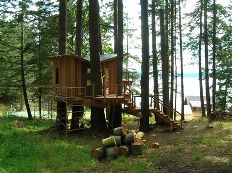 coo house designs at housephoenix tree house design