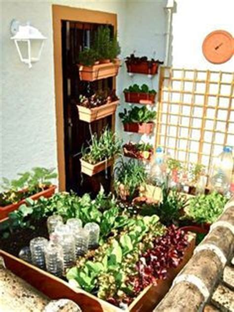 Vegetable Garden Plants balcony gardening with containers