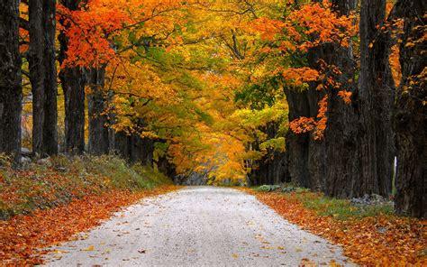 landscape mountainautumn leaves road nature desktop