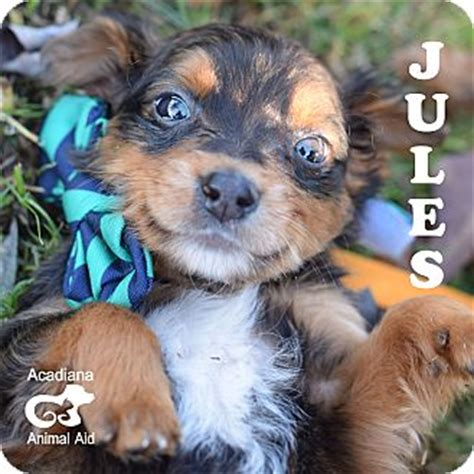adopt a denver adopt a puppy denver co dogs our friends photo