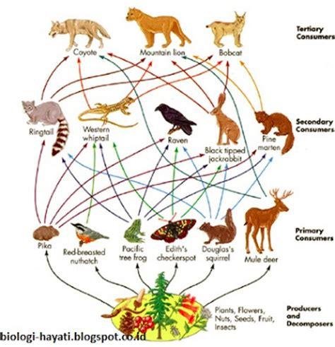 jaring jaring makanan pada ekosistem darat ait tawar mangrove dan hutan hujan tropis