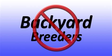 what is backyard breeding what are backyard breeders and how to avoid them pomsky pals