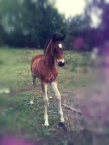 Super Cute Baby Animals Horse