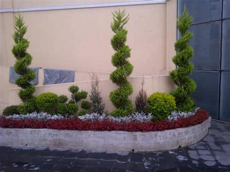 foto jardinera rectangular  planta decoratiba de