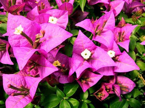 imagenes gratis flores exoticas fondos escritorio flores ex 243 ticas