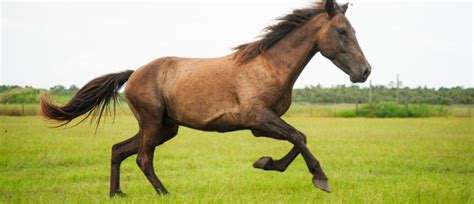 pictures of mustang horses image gallery mustang