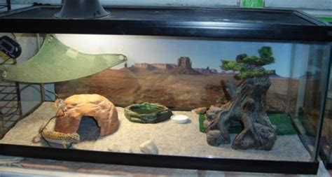 do hermit crabs need a heat l housing leopard geckos on sand the great debate gecko