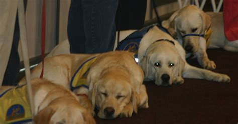 cci dogs brown tales cci puppy workshop