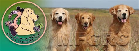 mid florida golden retriever club mid florida golden retriever club encourages ownership and promotes this purebred breed