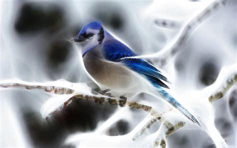 wallpaper blue birds blue birds wallpapers entertainment only