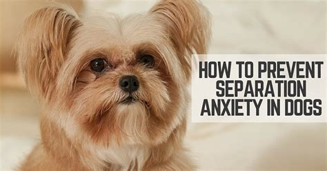 how to a s separation anxiety how to prevent separation anxiety in dogs thatmutt
