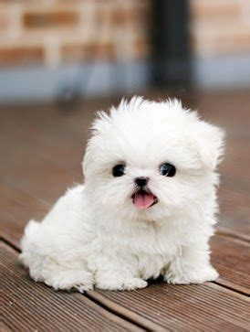 Small Dogs Free To Home Barnsley Best 25 Cutest Pets Ideas On Baby
